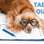 Table Quiz Fundraiser