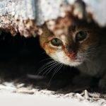 Donation - Cat