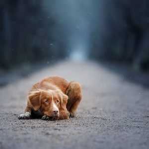 Donation - Dog