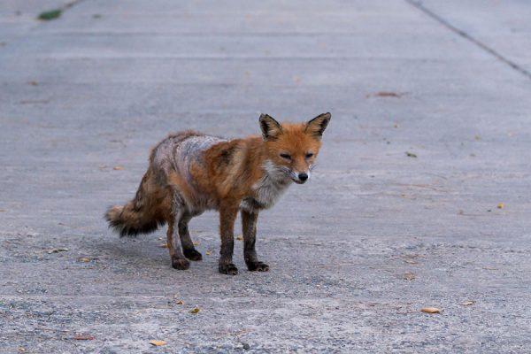 Christmas Donation - Wildlife Animal
