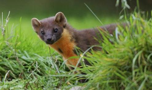 Wildlife Fundarising Table Quiz