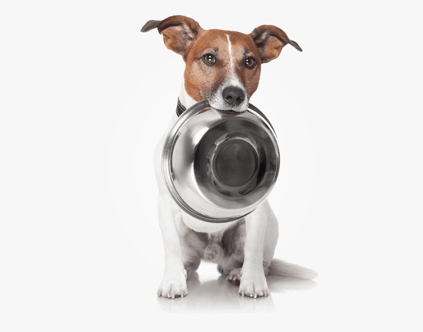 Dog Food Appeal