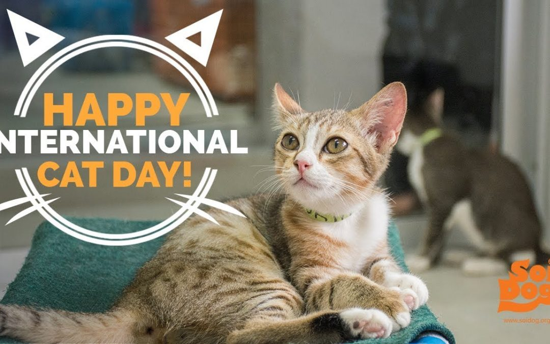 Happy International Cat Day 2021